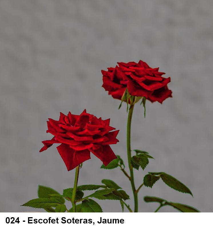 2_0024-escofet-soteras-jaume