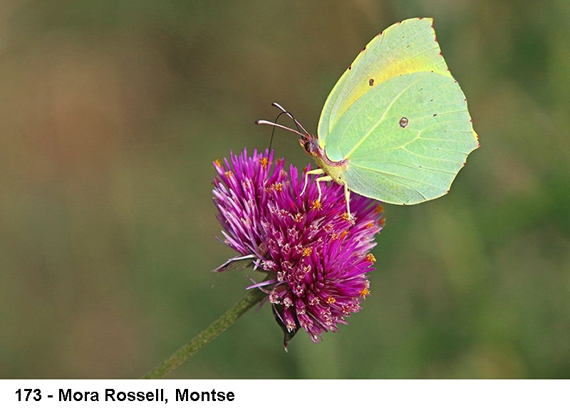 2_0173-mora-rossell-montse