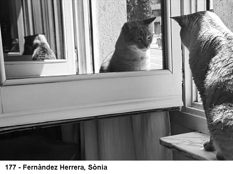 2_0177-fernandez-herrera-sonia